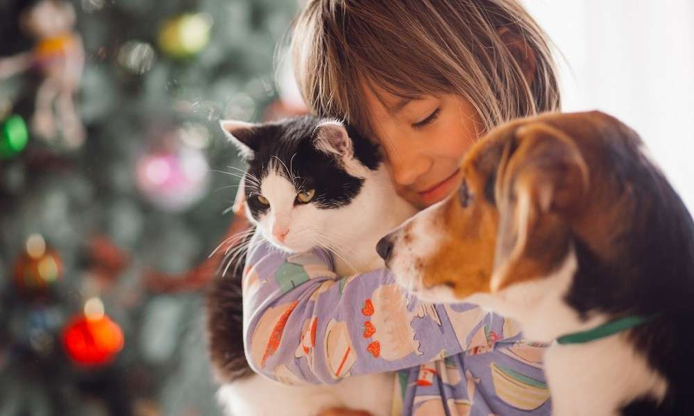 Which do you prefer cats or dogs at home
